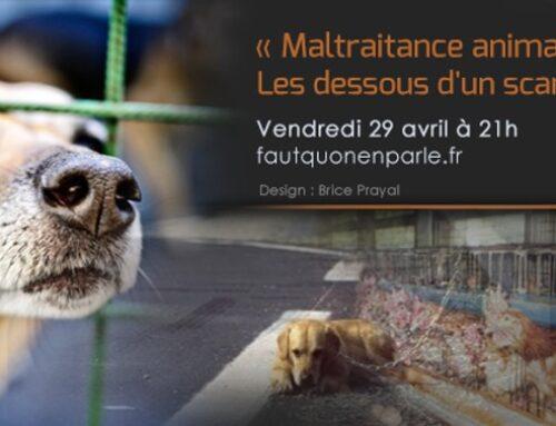 Maltraitance animale : les dessous d'un scandale